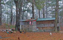 cluckinacritterfarm001007.jpg